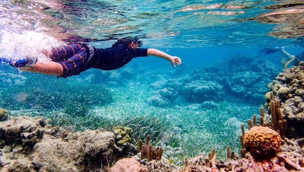 Fascinating underwater world in Istria